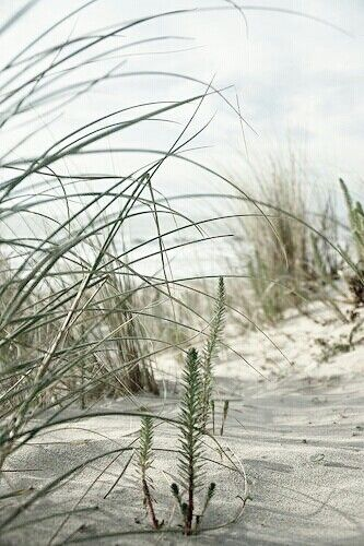 Pin By Elena Zyryanova On Florida Nature Beach Living Beach Scenes