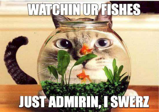 Watchin ur fishes