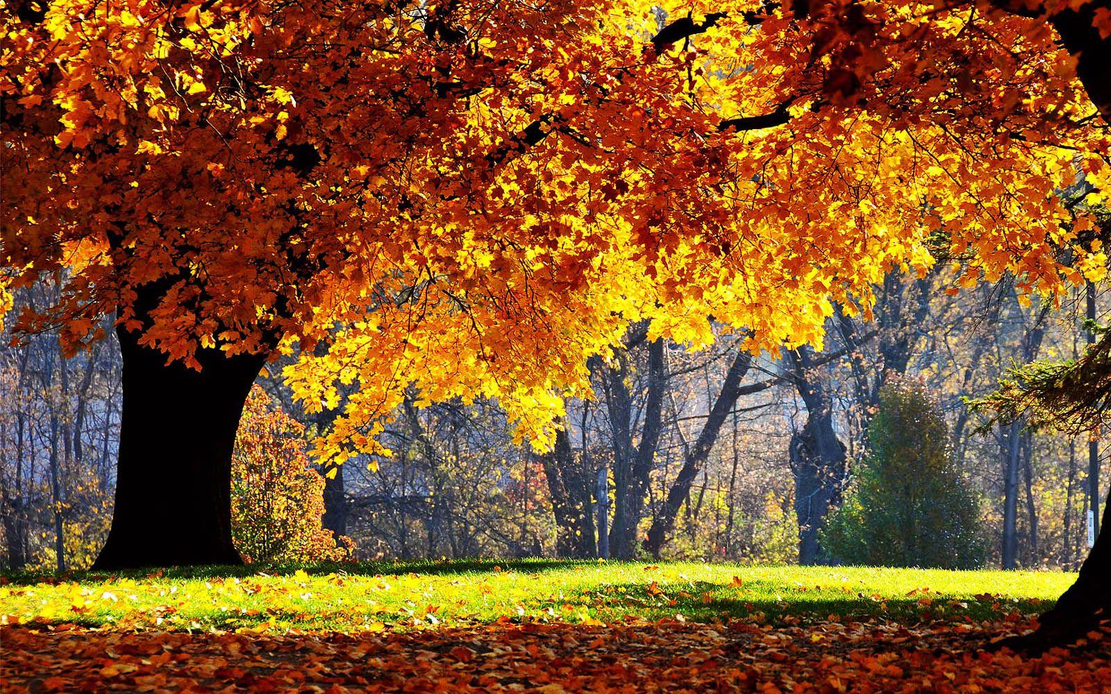 Most Beautiful Fall Scenes Tag Beautiful Autumn Scenery