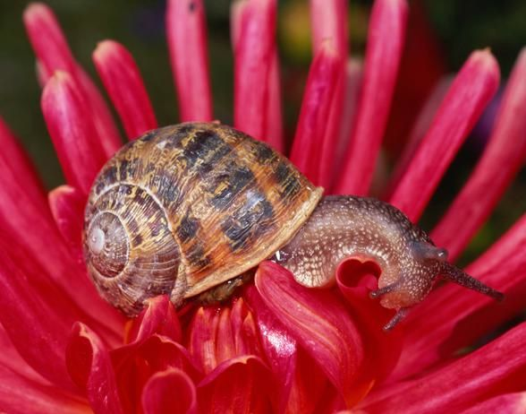 Aphids, Slugs And Snails: Oh My! Keep Bugs Out Of The Garden Naturally