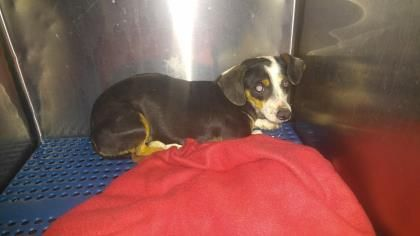 Update Current Status Is Unknown 35077479 Located In El Paso Tx