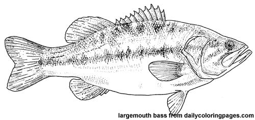 texas-largemouth-bass-fish-coloring-pages.png 500×236 ...