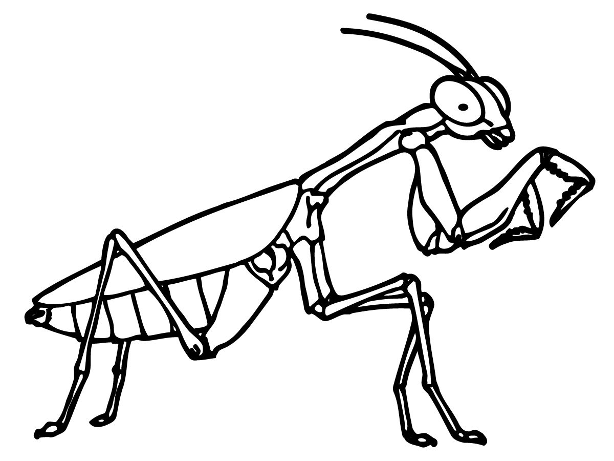printable bug coloring pages coloring me fam visit ideas