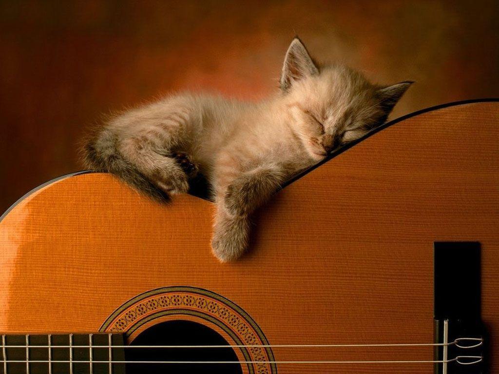 Kitten Sleeping On An Acoustic Guitar Funny Cat Memes Sleeping Kitten Great Cat