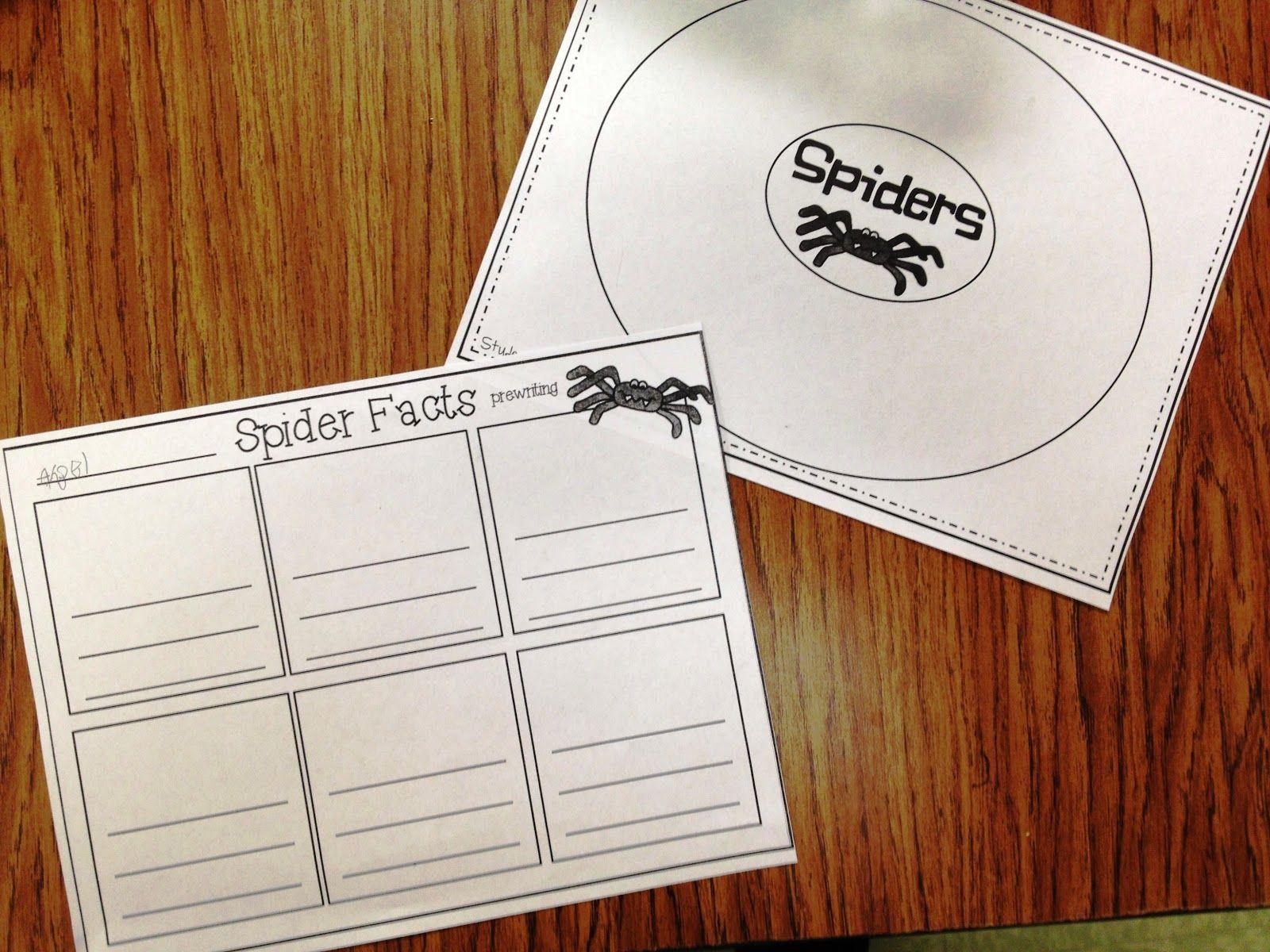 Tunstalls Teaching Tidbits Spiders