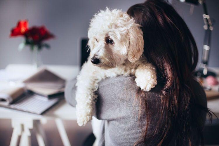 Hunde für Allergiker und 10 nicht haarende Hunderassen im
