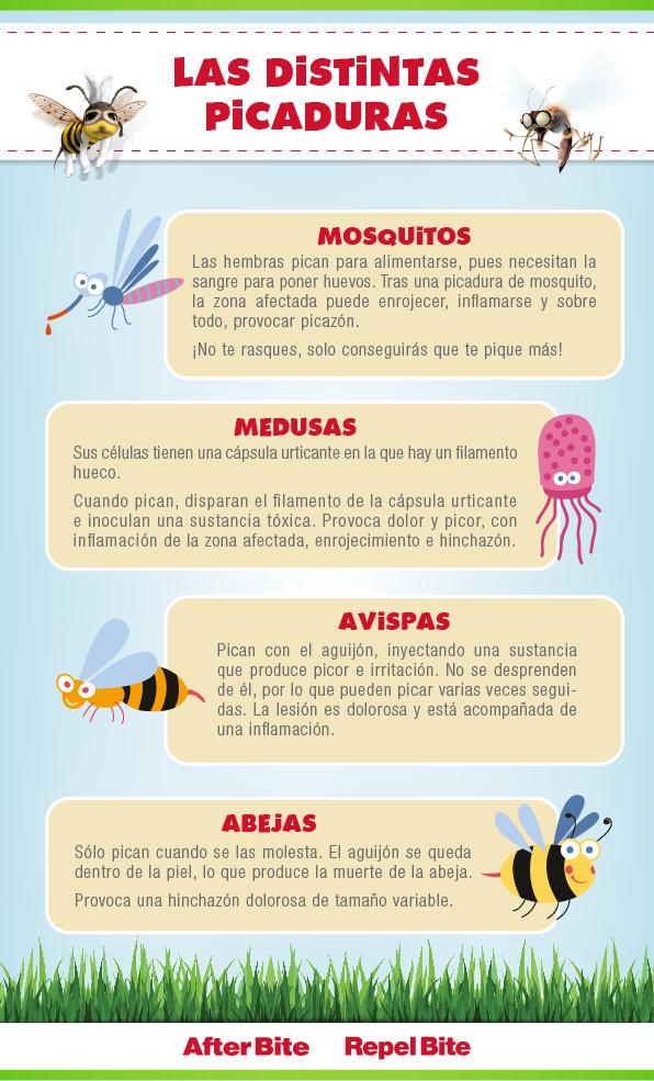 Las Diferentes Picaduras Más Frecuentes Picaduras Picaduras De Mosquitos Seguridad E Higiene