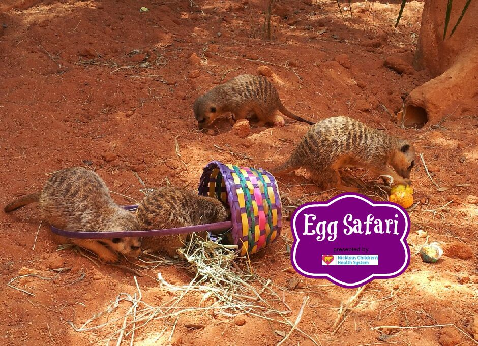 We Re Getting Super Egg Cited About Egg Safari March 31 April 1 Can You Join Us For Egg Hunts Photos With The Easter Bunny Zoo Zoo Animals Holiday Specials
