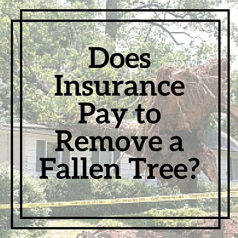 Does homeowner insurance cover tree removal with images