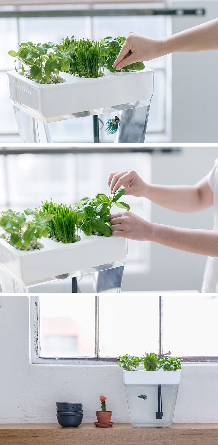 The Water Garden puts aquaponics within reach for urban dwellers who want to enjoy fresh herbs and fishy friends! This self-cleaning, auto-feeding fish tank requires almost no maintenance, meaning you get maximum benefits of gardening without much work!