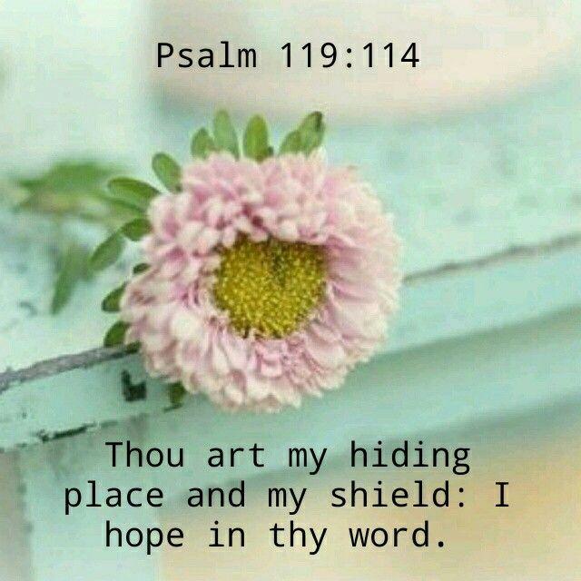 Image result for psalm 119:114 kjv