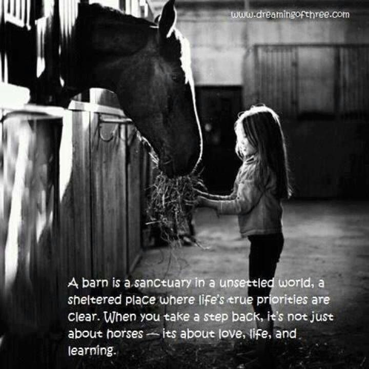 a barn is a sanctuary