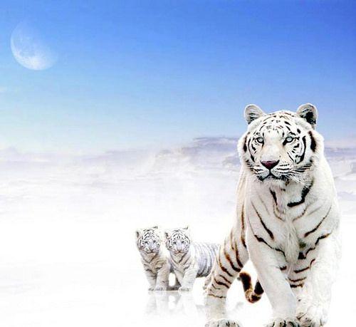 Süße Bilder Zum Runterladen stromberg das größte a h bei tv total tigers cat and