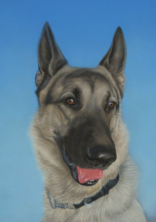 Dog portrait in pastel from Art by Karie-Ann. International commissions welcome.