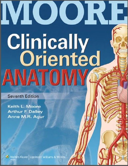 Downlaod Free Pdf Clinically Oriented Anatomy Moore All Medical