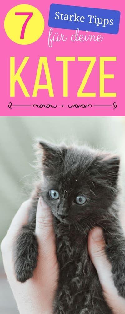 Die 7 genialsten Tipps für Katzenbesitzer Cat