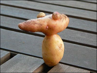 weird vegetables - Google Search | Funny vegetables, Funny ...