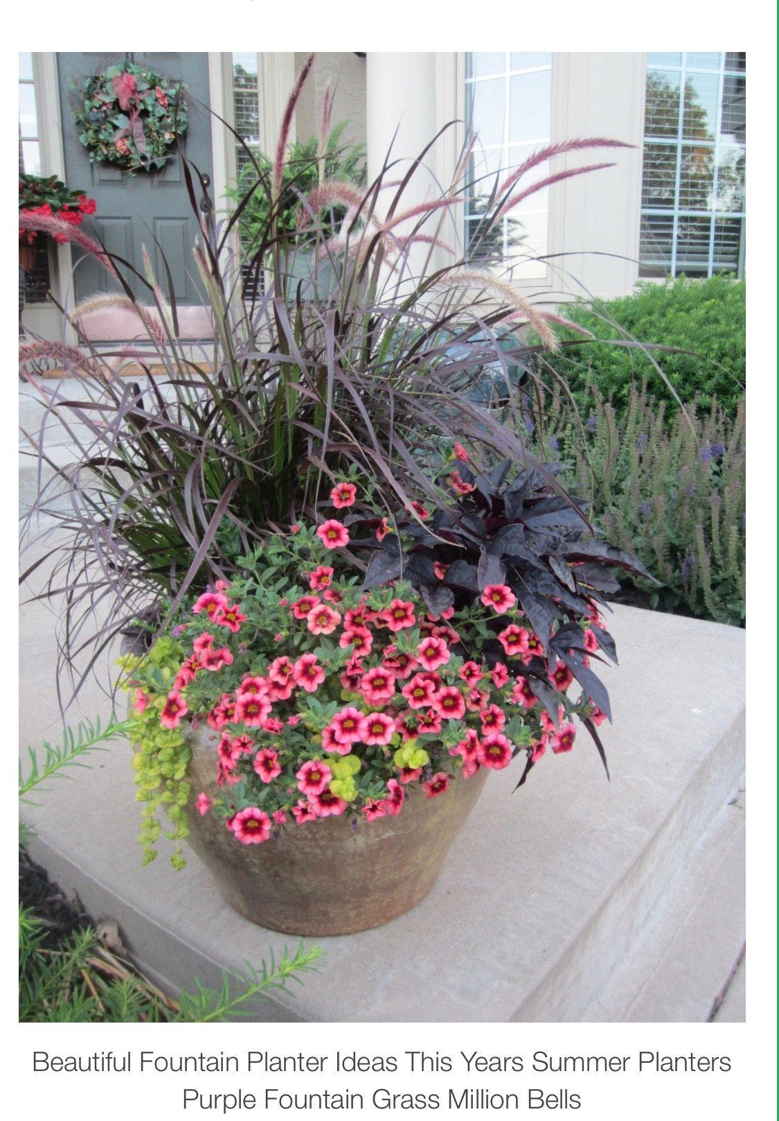 Pin By Anna Sztuk On Flowers Plants Summer Planter Patio Flowers Fountain Grass