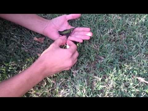 ガムがこびりついて飛べなくなった可哀想な野鳥。優しい手による救出劇 – grape [グレープ] – 心に響く動画メディア