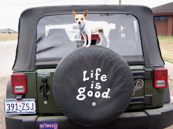 Here S What We Ve Spotted Recently On The Road Jeep Dogs Pet Car Jeep Tire Cover