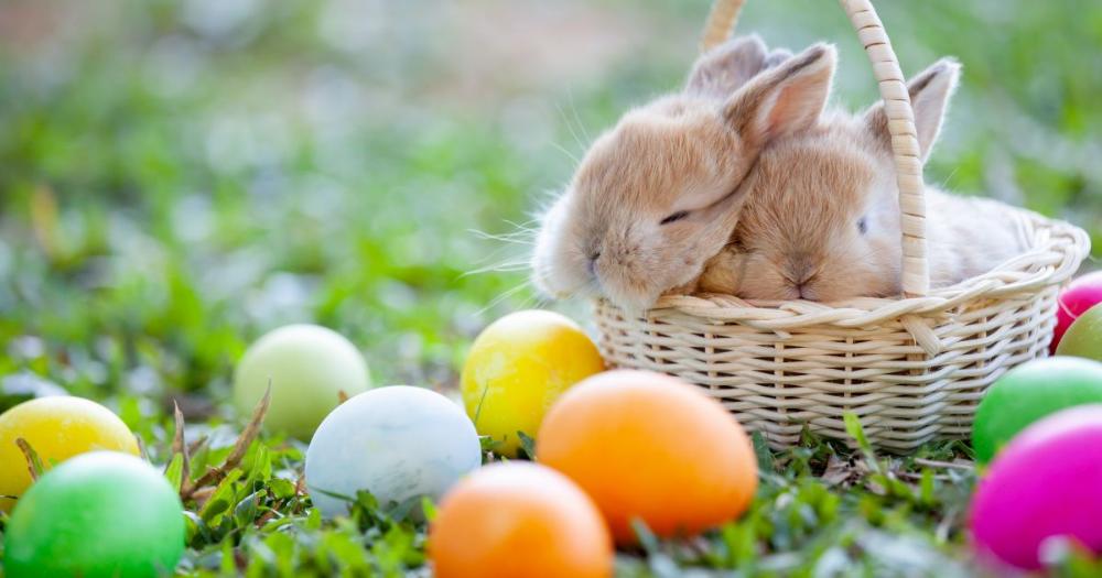 10 Erdekes Teny A Husvetrol Amit Csak Kevesen Tudnak Happy Easter Pictures Easter Pictures Easter Bunny Pictures