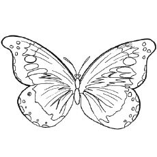 Top 50 Free Printable Butterfly Coloring Pages Online | Printable ...