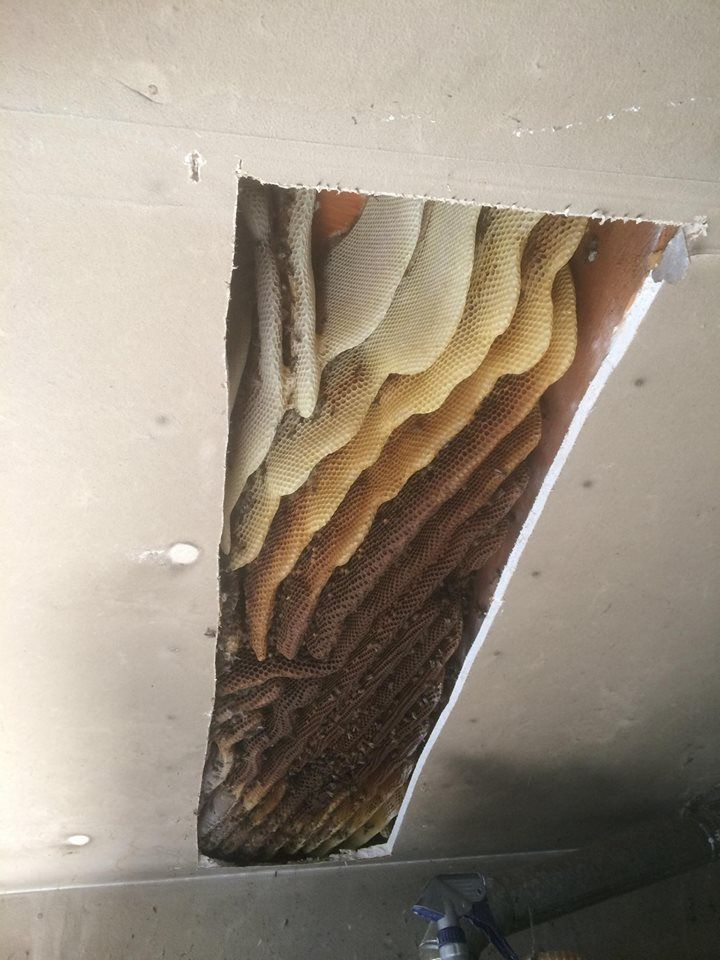 48ed1b1413e7aec5fdd90daf7c17d7fd - How To Get Rid Of Bee Hive In Attic
