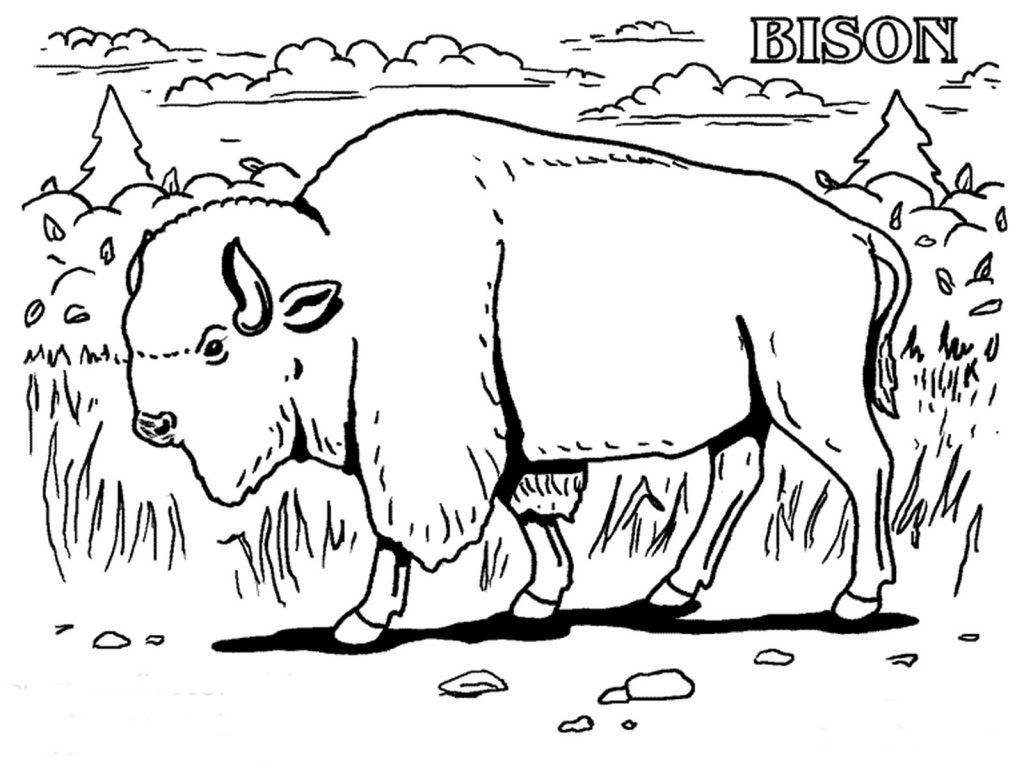 Free Printable Bison Coloring Pages For Kids Animal Coloring Pages Animal Coloring Books Coloring Pages