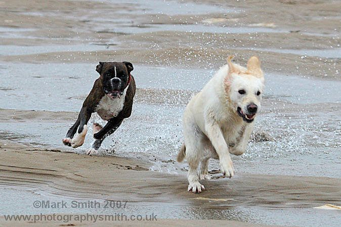 Even dogs love the beach!