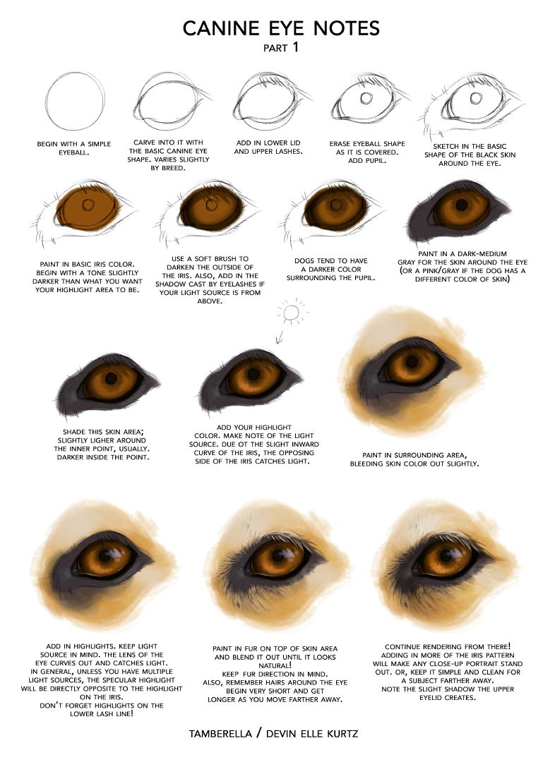 Canine Eye Notes Pt 1 By Tamberella On Deviantart Sketch Draw
