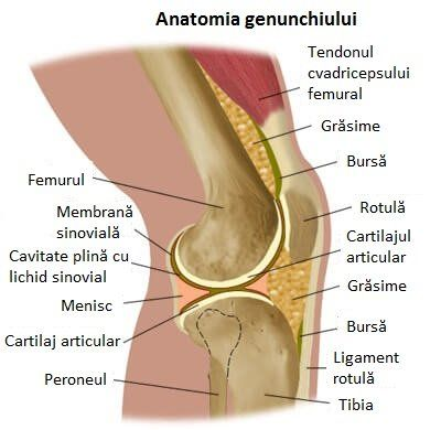 care este durerea în articulația genunchiului
