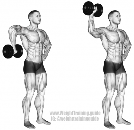 Targets Your Teres Minor Synergistic Muscles Are Infraspinatus Supraspinatus And Posterior Deltoid Also Called Standing Dumbbell External Rotation