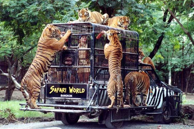 Image result for 5. Safari World