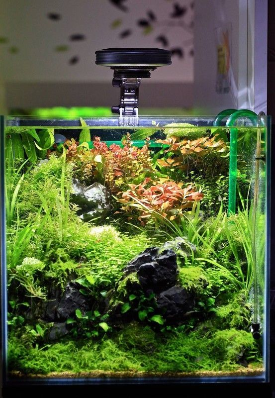 55 Best Aquascaping Design Ideas to Decor Your Aquarium # ...