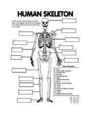 English worksheet: Skeletal System | Face | Pinterest | Worksheets ...