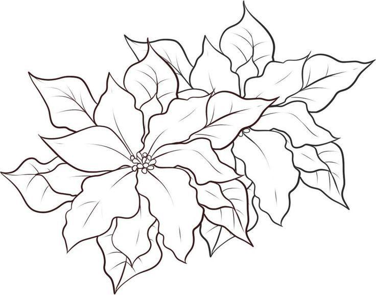 Imagenes De Flores De Navidad Para Colorear Muestra Hermosos