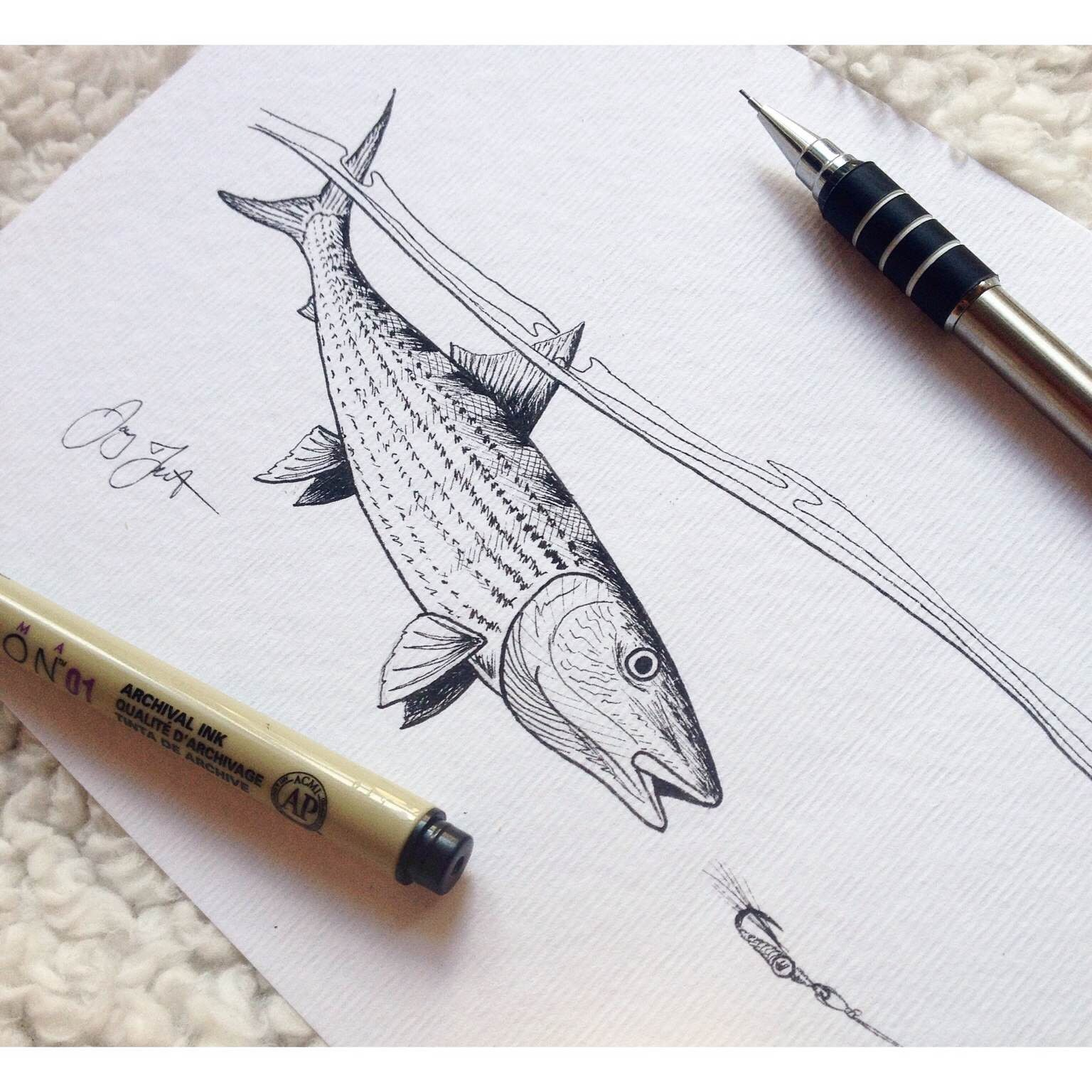 how to draw a bone fish
