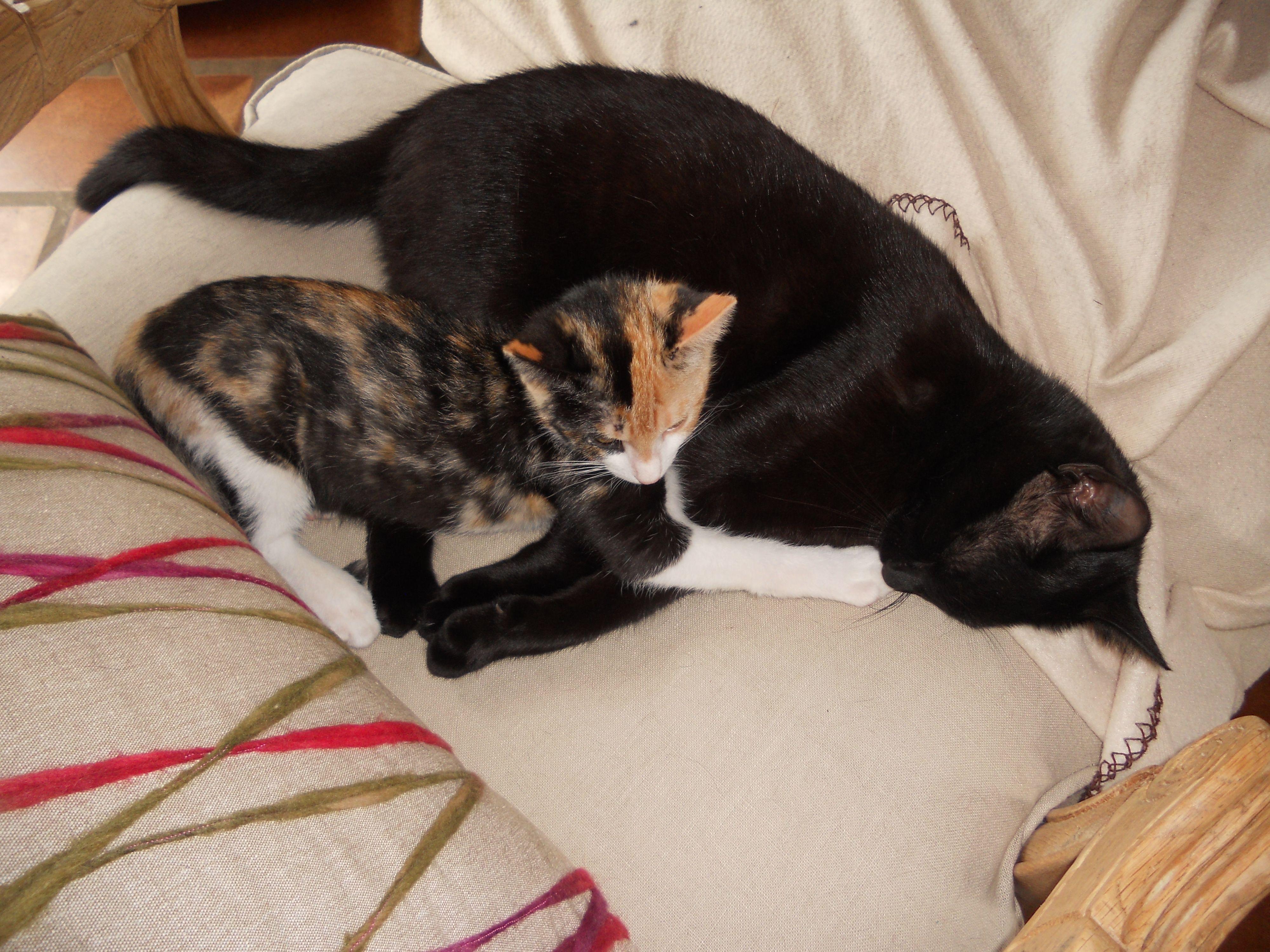 Gaîa, le pot de colle #chat #chaton #cat #chambredhote #bandb #cute #mignon #tarn #castelnaudemontmiral #gaillac http://lamaisonduchai.com/accueil.html