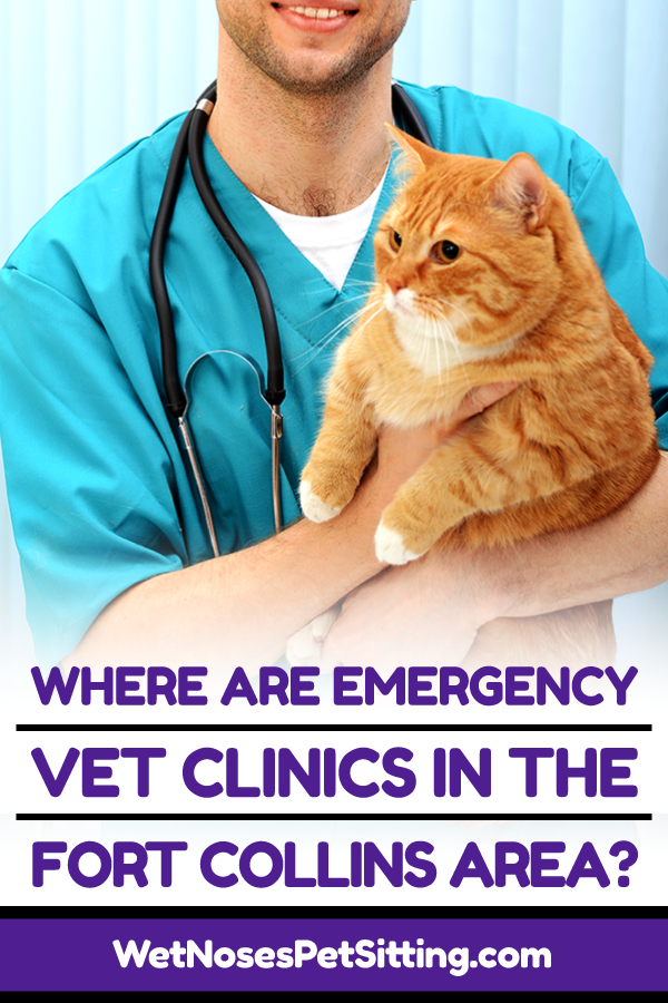 Where Are Emergency Vet Clinics In The Fort Collins Area Emergency Vet Clinic Emergency Vet Vet Clinics