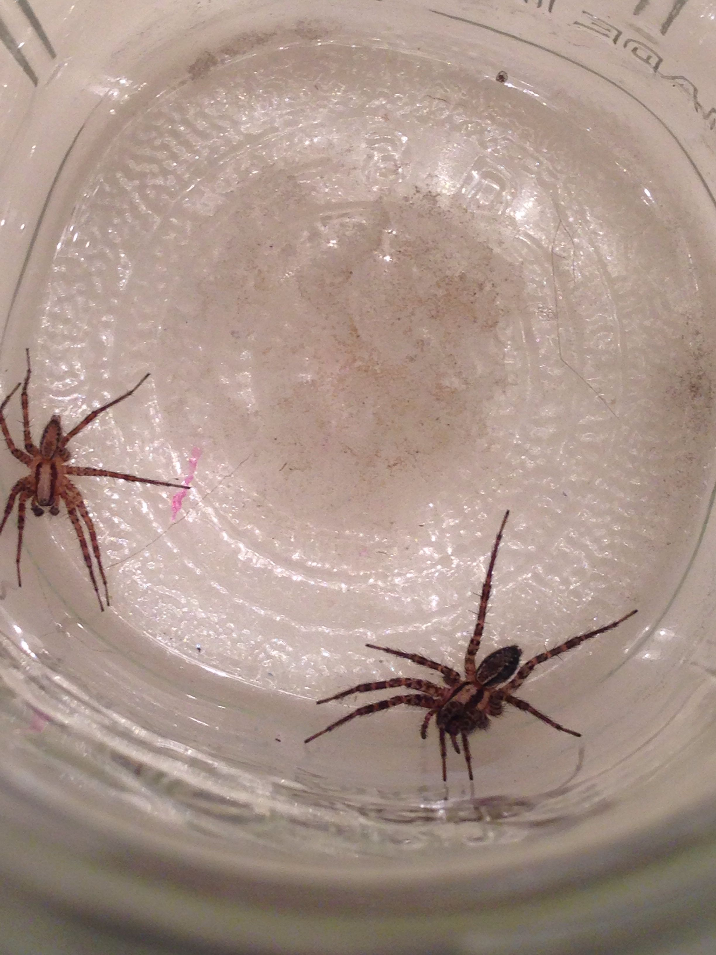 More gross spiders in my room:(