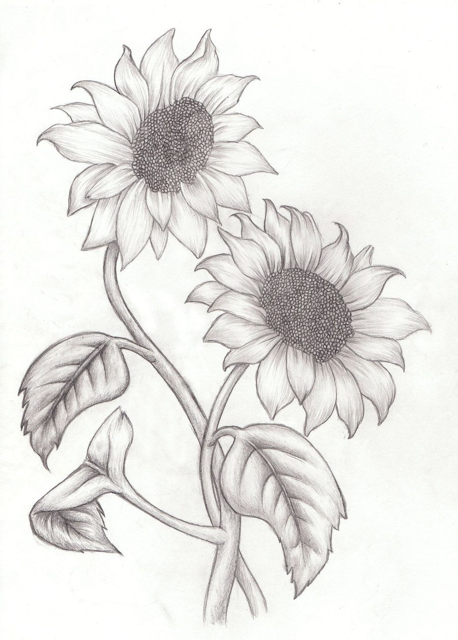 How To Draw Sunflowers - Google Search | Drawings Of Flowers | Tattoos Sunflower Sketches Drawings