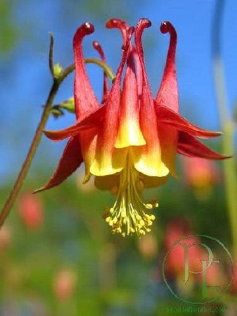 Pin On Flower Side Hustle
