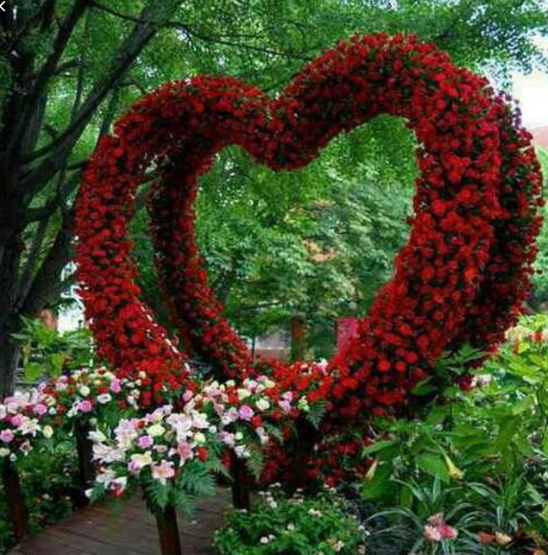 Pin by Jewel Dazzle on Cuore Flower art, Flowers