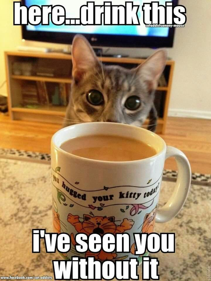 Coffee Kitteh | Funny animal memes, Funny cat compilation, Funny ...