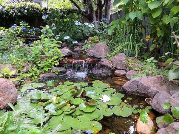 Las mejores plantas para tu estanque Estanques, Plantas y Mejores