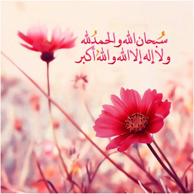 سبحان الله والحمد لله ولا إله إلا الله والله أكبر Flowers Beautiful Flowers Plant Nursery