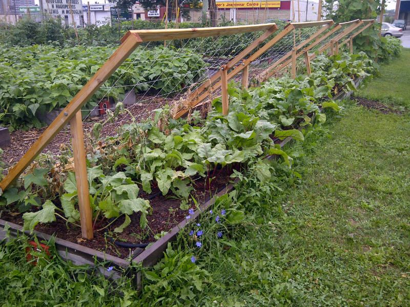 Good How To Build A Cucumber Trellis | Shade Trellis This Simple Trellis System  Was Designed At
