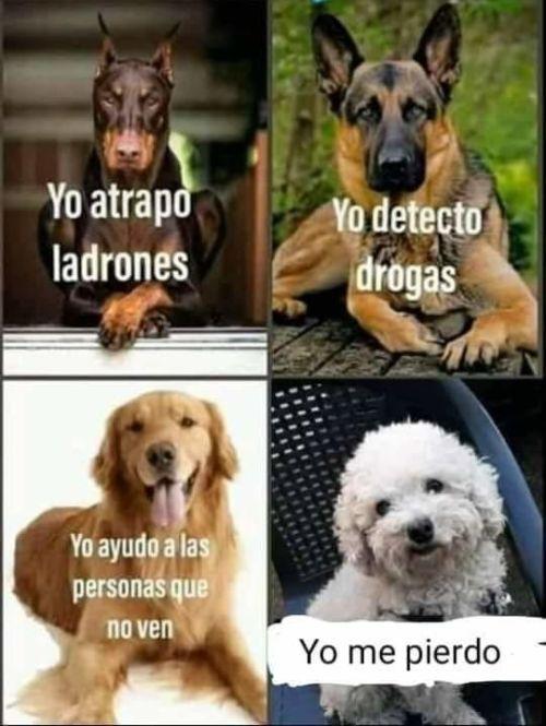 Perros Graciosos Http Enviarpostales Es Perros Graciosos 441 Perros Animales In 2020 Memes Silly Memes Funny Memes