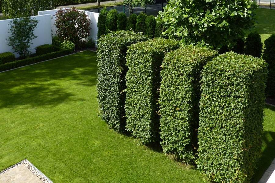 nicht nur immergrüne eignen sich für formschnitte: eine klassische, Gartenarbeit ideen