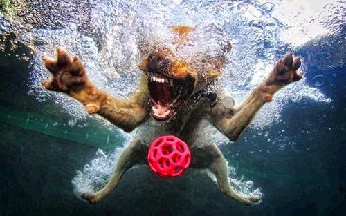 Guardiamo solo i canini pronti al morso o osserviamo che chi non cerca non trova? Anche sul #lavoro…